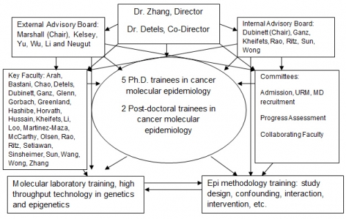 Administrative Structure of the UCLA Cancer Molecular Epidemiology Training Program